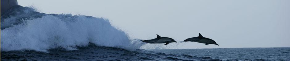 delfini-bebi